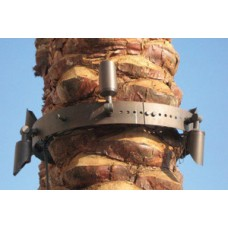 Mounted Tree Ring 3W-12W